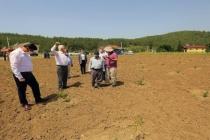 Fethiye'ye Şarap Üretim Fabrikası Açılacak!