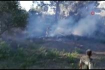 Ortaca'da Korkutan Orman Yangını