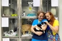 Ayağına Doku ve Kemik Nakli Yapılan Kedi 'Muğla', Yaşama Tutundu