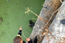 Atık Su Kuyusuna Düşen Yavru Köpek Kurtarıldı