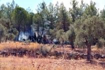 Milas'ta Çıkan Orman Yangını Kısa Sürede Söndürüldü