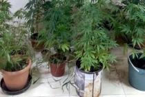 Milas'ta Jandarmadan Uyuşturucu Baskını