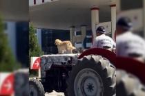 Sevimli Köpeğin Traktör Üzerindeki Yolculuğu Görenleri Şaşırttı