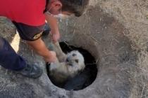 Sevimli Köpek, İtfaiyenin Yardımı İle Kurtuldu