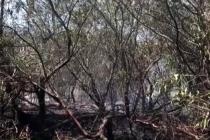 Seydikemer'de Okaliptüs Ağaçlarının da Bulunduğu 2 Hektarlık Alan Yandı