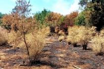 Muğla'da Elektrik Tellerinden Çıkan Yangında Tazminat Bekliyorlar