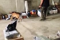 Muğla'da Kargo İle Uyuşturucu Sevkiyatına Operasyon