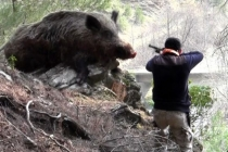 Türkiye'de 9 Kişi Domuz Sanılarak Vuruldu: 1'i Muğla'da!