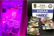 Bodrum'da Bir Şahıs Evi Uyuşturucu Tarlasına Çevirmiş