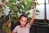 Fethiye'de Dut Ağacı Ekim Ayında Meyve Verdi