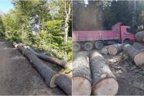 Fethiye'de Orman Çetesinin Lideri Kooperatif Başkanı Çıktı!