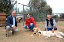 Datça'da Hayvan Barınağına Destek