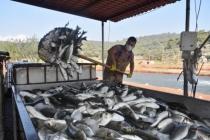 Milas'ta Atıl Tarım Arazileri Balık Üretimi İçin Değerlendiriliyor