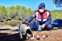 Muğla'da Jandarma'nın Hayvan Hassasiyeti Yürekleri Isıttı