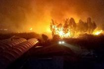 Seydikemer'de Sazlık Alanda Yangın: Seralara Sıçramadan Söndürüldü
