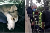 Bodrumda Vahşet: Yavruları Olan Köpek Tüfekle Vurularak Öldürüldü
