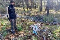 Fethiye'de Ormanlık Alanda Zehirli Kemikler Bulundu