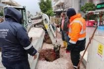 Marmaris'te Cadde Yenilemesi Sırasında Kaldırılan Ağaçlar Yeniden Toprakla Buluştu