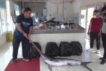 Fethiye Açıklarında 80 ve 100 Kilogramlık 2 Kılıçbalığı Oltayla Yakalandı