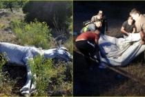 Marmaris'te Beş Kilometre Yürüyen Ekipler, Yaralı Yılkı Atını Film Gibi Operasyon İle Kurtardılar