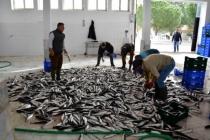 Pandemi Döneminde Muğla'dan 410 Milyon Dolarlık Balık İhracatı
