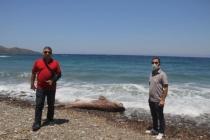 Datça'da 3 Metrelik Ölü Köpek Balığı Sahile Vurdu!