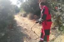 Bodrum'da Yakalanan İki Yılan Doğaya Salındı