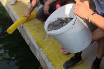 Muğla'da 30 bin levrek yavrusu denize bırakıldı