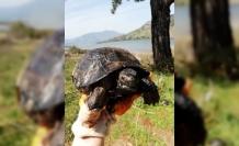 Ziftten Kurtarılan 3 Kaplumbağa Doğaya Salındı