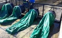 Marmaris'te Dere Ağızları Ağ İle Kapatılıyor