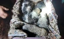 Seydikemer'de Boğulmak Üzere Olan Yavru Köpekleri İtfaiye Kurtardı