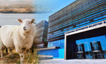 İBB'nin Kurban Kampanyasına 12 Günde Milyonlarca Lira Bağışlandı