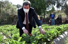 Muğla Valisi Orhan Tavlı, Tarım Üreticilerini Ziyaret Etti