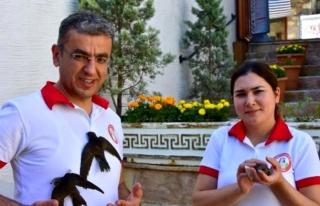 MUĞLA'DA BELEDİYE ÇALIŞANLARI YAVRU EBABİL...