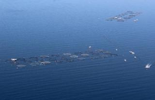 Türkiye 100 Ülkeye Balık İhraç Ediyor!