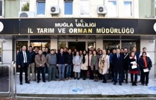 Muğla'da Zeytin Budama Eğitimi Verildi!