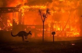 Tokat Avusturalya Yangınıyla İlgili Paylaşımda...
