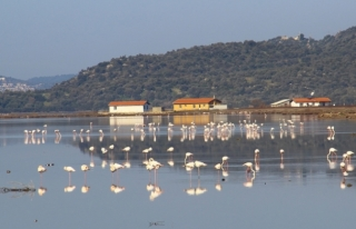 Flamingolar Bodrum'a Akın Etti!