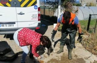 Fethiye'de Su Kanalında Mahsur Kalan Köpek...