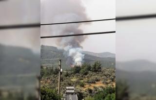 Milas'ta Orman Yangını!