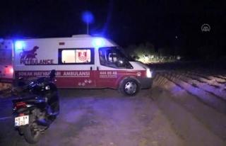 Bodrum'da, İki Kişiye Saldıran Köpek Sakinleştirici...
