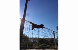 Bodrum'da Tele Takılan Kediyi İtfaiye Kurtardı