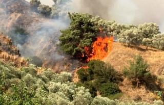 Aydın'daki Yangını Söndürme Çalışmaları...