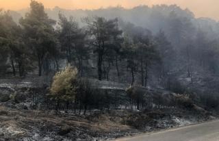 Manisa'daki Orman Yangınını Söndürme Çalışmaları...