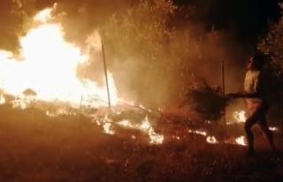 Menteşe'de Çıkan Orman Yangını Söndürüldü