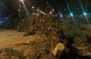 Yatağan'da Yol Yapımı Nedeniyle Kesilen Ağaçlar...