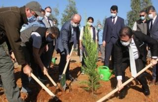 Cumhurbaşkanı Talimat Verdi Fethiye Ağaçlandırılacak