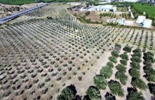 Bozulan Maden Sahalarına 10 Milyon Ağaç