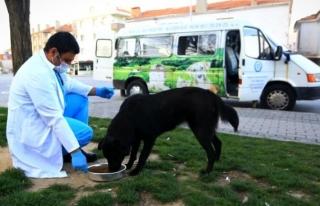Kısıtlamada Sokak Hayvanları Büyükşehir'e...