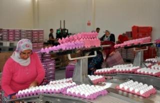 Yetkililer, Yumurta Fiyatlarındaki Artışın Nedenini...